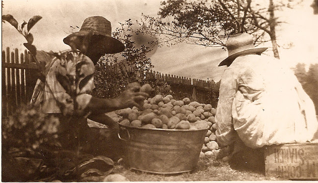 My great-grandparents, Maude and Claude Phillips, sorting potatoes. Photo courtesy Susan Lutz. Photographer and date unknown.
