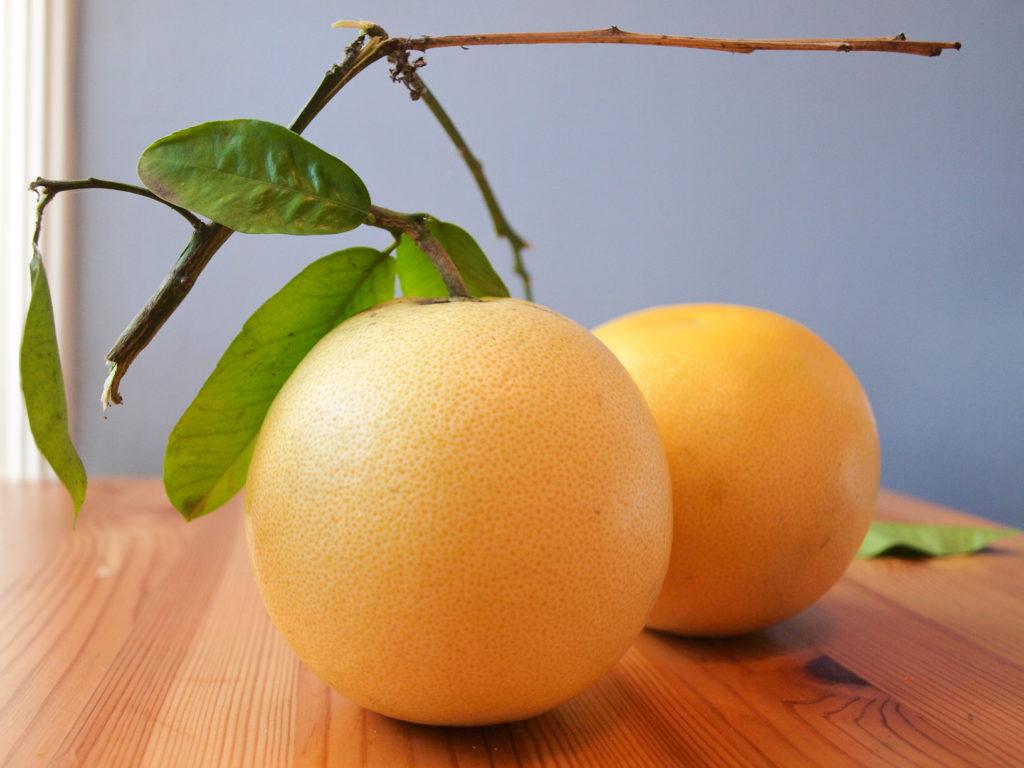 grapefruit_SusanLutz